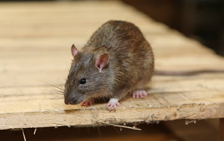 Guide to Preventing Pests in Your Rental Properties